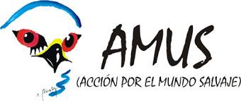 AMUS (mediano)